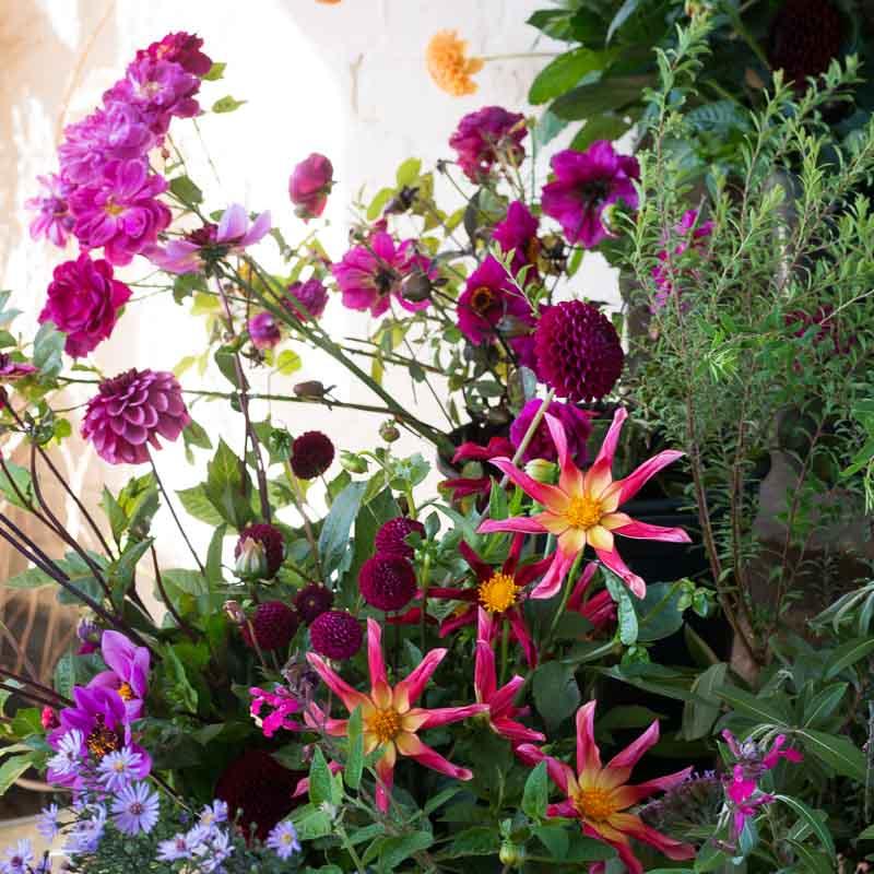 Dahlias bridal bouquet