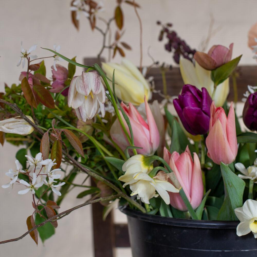 Fritillaries & Tulips